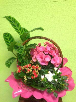 Cesta de plantas - Yamil Floristas