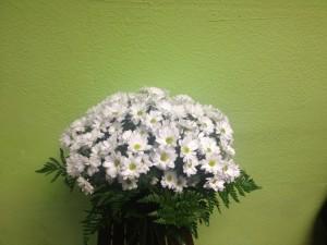 Ramo Margaritas - Yamil Floristas