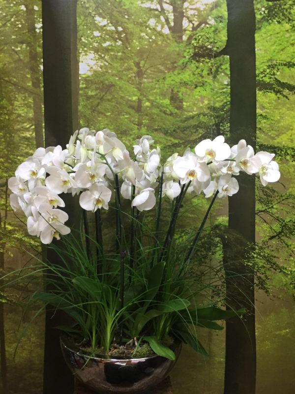 centro orquideas Mediano