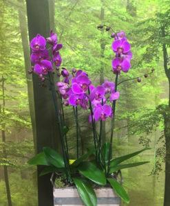montaje de orquideas